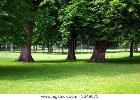 Secular Trees