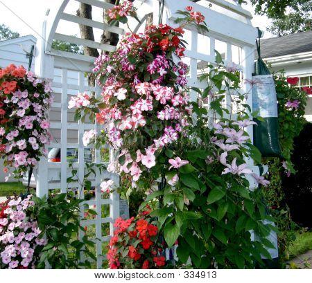 花园乔木 1