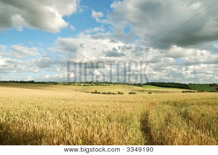 Cornfields With Clouds