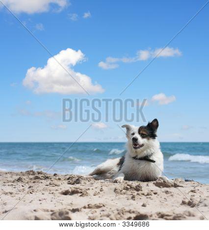 Dog Under Blue Sky