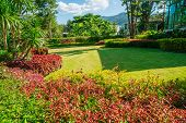 Green Lawns, Front Lawn For Background, Garden Design, Beautiful Shady Landscape, House With Garden, poster