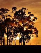 stock photo of ceres  - landscape with blue gum trees and montains in the background - JPG