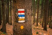 Touristic Sign Or Mark On Tree Next To Touristic Path With Nice Autumn Scene In Background. Forrest  poster