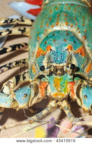 Spiny lobster also known as langouste or rock lobsters