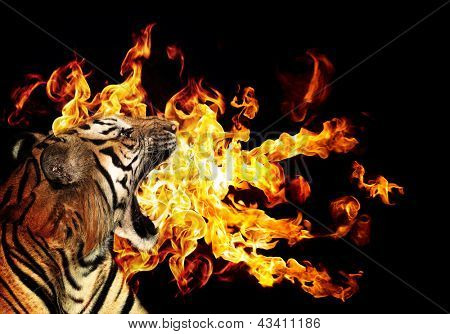 Portrait of a beautiful tiger with flames over blck background