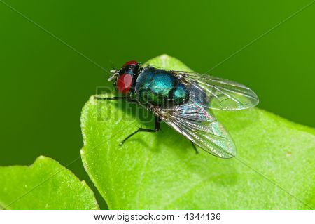 Small Housefly And Plant In The Parks