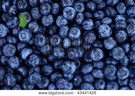 Blueberries With Little Green Leaf