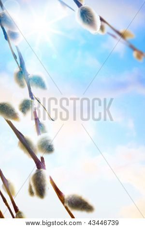 Art Spring Flowers Background Willow Branch