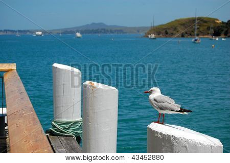 Seagull At Pier Post