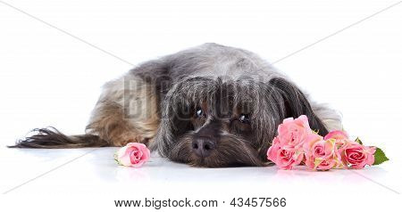 Decorative Small Shaggy Doggie And Roses.