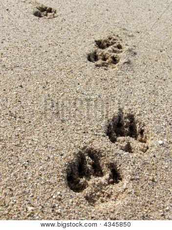 Dog Pawprints