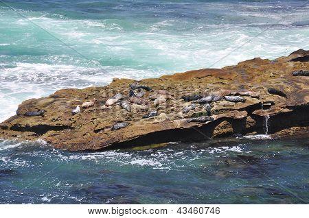 Seals on rocky ledge