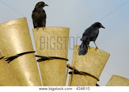 Two Crows And A Rusty Mill