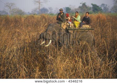 Elephant Safari