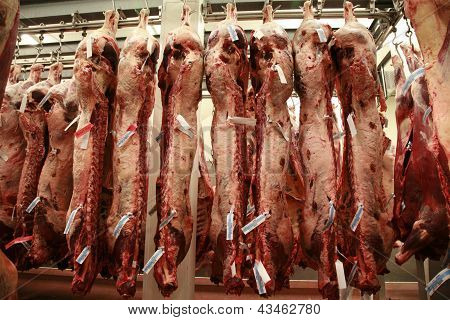Several Cattle Carcass Hung In A Refrigerator