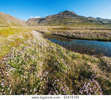Mighty fjords rise from the sea in the Westfjords Peninsula, northwestern Iceland. The landscape under the fjords is full of brooks and flowers.