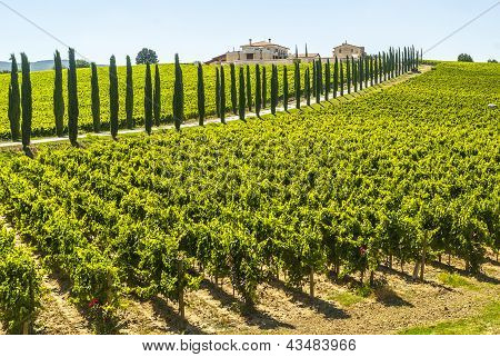 Umbria - Farm With Vineyards And Cypresses