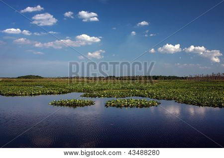 Peaceful Marshland