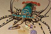 stock photo of lobster boat  - Spiny lobster also known as langouste or rock lobsters - JPG