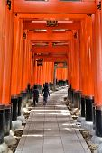 image of inari  - Fushimi Inari Taisha shrine in Kyoto prefecture of Japan - JPG