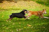 Two Funny Dogs Play Together