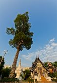 stock photo of vihara  - Venerable  - JPG