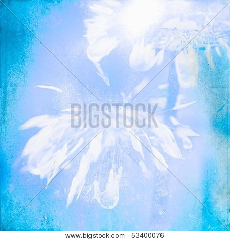 Abstract White Dandelions
