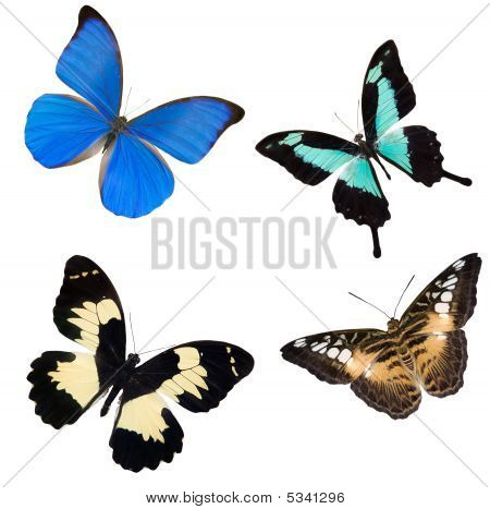 Four Tropical Butterflies