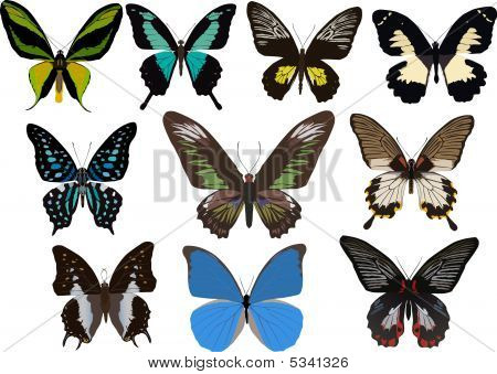 Ten Tropical Butterflies