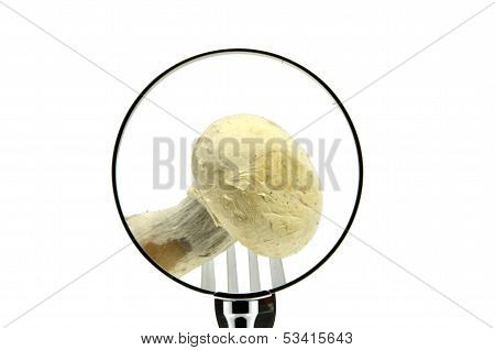 A mushroom on a fork punctured seen behind a magnifying glass