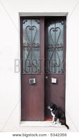Doorstep Dog