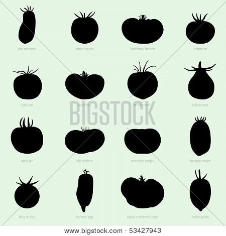 Sorts of tomatoes