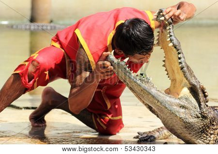 Crocodiles Show