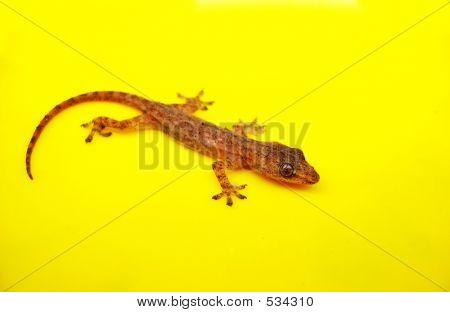 Closeup Of A Tiny Lizard