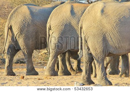 Elephant, African - Wildlife Background from Africa - Nature's Weight loss and Diet Clinic applicant