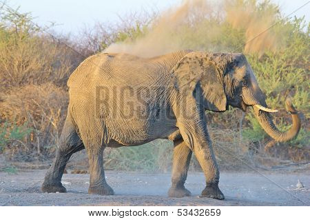 Elephant, African - Wildlife Background from Africa - Dust Bath and Sun screen from Nature