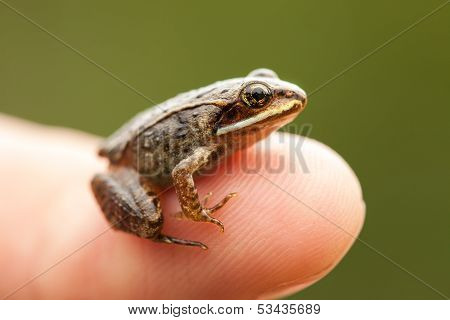 Miniature From Sitting On A Humain Finger