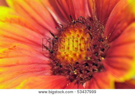 Closeup from Cockade Flowers