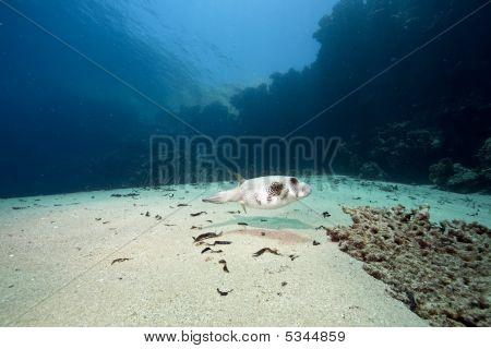 Ocean, Sun And Pufferfish