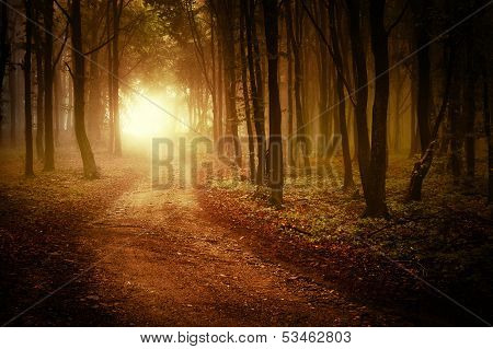 Sunrise in a forest in autumn with fog