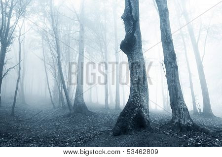 Eerie and spooky forest with fog and trees