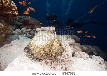 Ocean, Coral And Stonefish