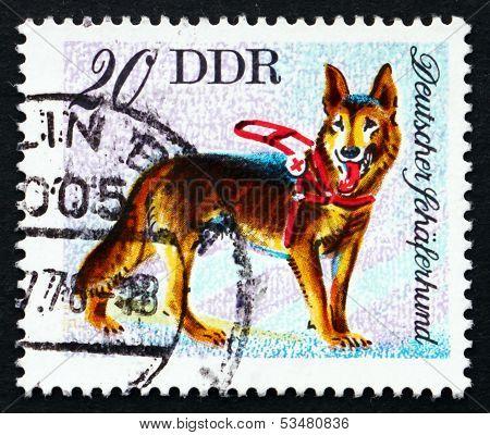 Postage Stamp Gdr 1976 German Shepherd, Dog