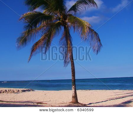 A palm tree in paradise