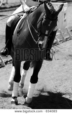 Dressage/Equestrian Riding #1 (BW)