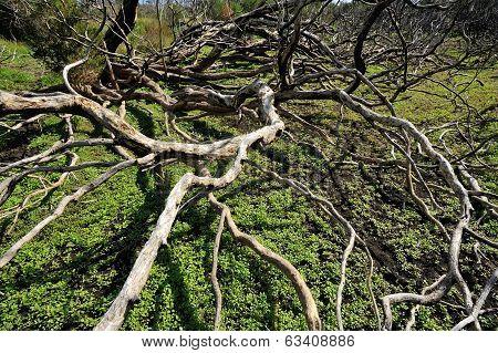 Fallen Forest