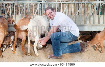 Farmer Milking Goats