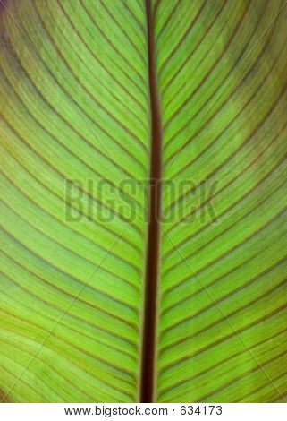 Vertical Green Leaf