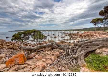 Fallen Tree In A Rocky Bay