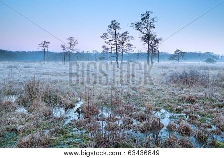 Cold Frosty Sunrise On Swamp